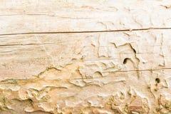 Die Beschaffenheit des alten Naturholzes, der trockene gezierte Klotz wird durch kleine Sprünge, hat eine ungleichmäßige Farbe ge Lizenzfreies Stockbild