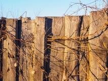 Die Beschaffenheit des alten Zauns mit getrockneten wilden Gurken stockbilder