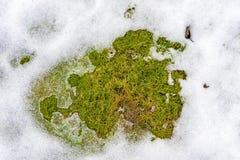 Die Beschaffenheit des aufgetauten Schnees liegt auf dem grünen Gras des Frühlinges in stockbilder