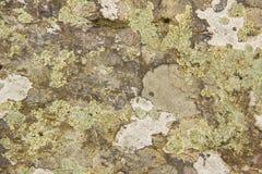 Die Beschaffenheit des großen Waldes des Steins mit einem Moos Stockfotos