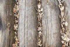 Die Beschaffenheit des Holzes Lizenzfreies Stockbild