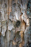 Die Beschaffenheit des Holzes für Hintergrund Lizenzfreie Stockfotografie