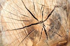 Die Beschaffenheit des Holzes schnitt herüber Kann als Hintergrund verwendet werden Stockbilder