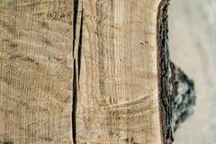 Die Beschaffenheit des Schnittes eines alten Baumstammes Lizenzfreie Stockfotografie