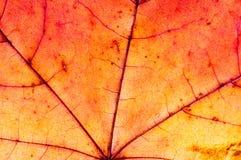 Die Beschaffenheit des trockenen Blattes des Baums Stockbild