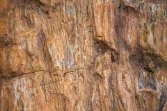 Die Beschaffenheit des versteinerten Holzes Lizenzfreie Stockbilder