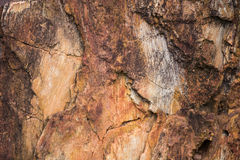 Die Beschaffenheit des versteinerten Holzes Stockfotos