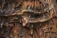 Die Beschaffenheit des versteinerten Holzes Stockbild