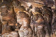 Die Beschaffenheit des versteinerten Holzes Lizenzfreies Stockfoto