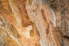Die Beschaffenheit des versteinerten Holzes Stockfoto