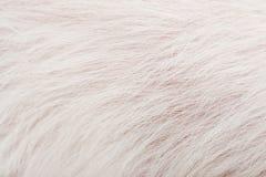 Die Beschaffenheit des weißen Pelzes Stockfotos