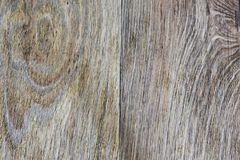 Die Beschaffenheit dieses Baums lizenzfreie stockfotografie