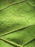 Die Beschaffenheit eines Traubenblattes lizenzfreie stockfotografie