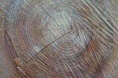 Die Beschaffenheit eines vor kurzem abgezogenen alten Baums schoss Nahaufnahme stockfoto
