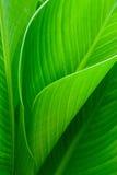 Die Beschaffenheit von grünen Blättern Lizenzfreies Stockbild