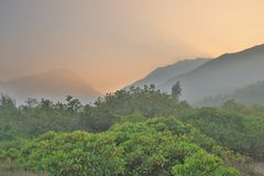 die Beschaffenheit von Sumpfgebiet in Tung Chungs-Fluss lizenzfreie stockfotos