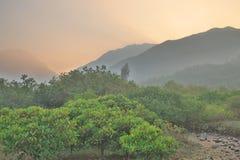 die Beschaffenheit von Sumpfgebiet in Tung Chungs-Fluss stockfotos
