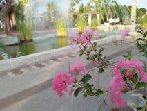 Die beste rosa Blume in einem Garten stockfotos