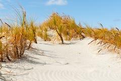 Die Betäubung Mangawhai geht Sanddünen voran Stockbilder