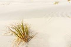Die Betäubung Mangawhai geht Sanddünen voran Stockbild