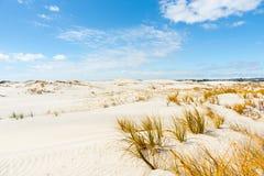 Die Betäubung Mangwhai geht Sanddünen voran Lizenzfreies Stockbild