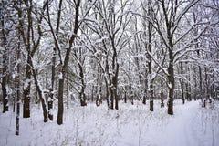 Die Betrachtung des überraschenden Winterwaldes gibt eine Empfindung der Fröhlichkeit und Fülle des Lebens stockfotos