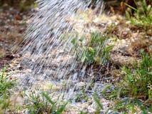 Die Bewässerung blüht im Garten mit einer gelben Gießkanne Schließen Sie oben auf dem Wasser, das aus der Bewässerung, Gartenarbe Lizenzfreies Stockfoto