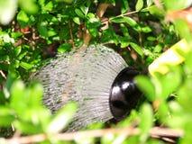 Die Bewässerung blüht im Garten mit einer gelben Gießkanne Schließen Sie oben auf dem Wasser, das aus der Bewässerung, Gartenarbe Stockbild