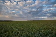 Die Bewegung der Gewitterwolken über den Feldern von Winter whea Stockfotografie
