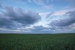 Die Bewegung der Gewitterwolken über den Feldern von Winter whea Lizenzfreie Stockbilder