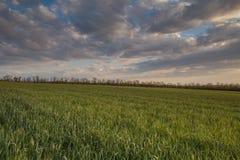 Die Bewegung der Gewitterwolken über den Feldern von Winter whea Lizenzfreie Stockfotografie