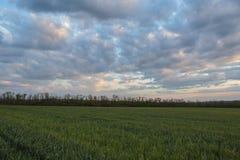 Die Bewegung der Gewitterwolken über den Feldern von Winter whea Lizenzfreie Stockfotos