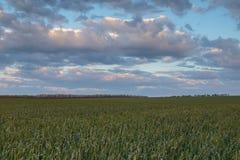 Die Bewegung der Gewitterwolken über den Feldern von Winter whea Stockbild