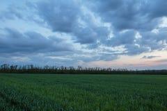 Die Bewegung der Gewitterwolken über den Feldern von Winter whea Lizenzfreies Stockbild
