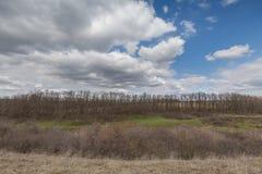 Die Bewegung der Gewitterwolken über den Feldern von Winter whea Lizenzfreies Stockfoto