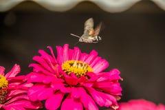Die Biene über den Blumen Stockfoto