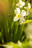 Die Biene fliegt zu den Farben Stockbild