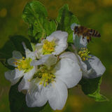 Die Biene montiert Nektar Stockfotografie