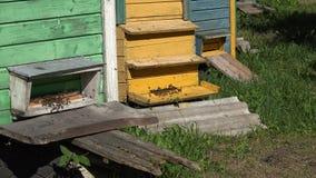 Die Bienen, die zu den bunten Bienenstockhäusern im Sommer fliegen, arbeiten im Garten Runde metallische Knöpfe 4K stock video