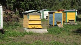 Die Bienen, die zu den bunten Bienenstockhäusern im Sommer fliegen, arbeiten im Garten schwenken 4K stock video
