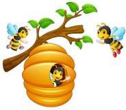 Die Bienen fliegen aus einem Bienenstock heraus, der von einem Baumast hängt stock abbildung