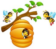 Die Bienen fliegen aus einem Bienenstock heraus, der von einem Baumast hängt Lizenzfreie Stockfotografie
