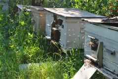 Die Bienen im Bienenstock Stockfoto