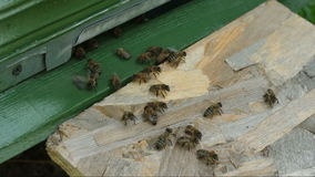 Die Bienen nähern sich Bienenstock stock video