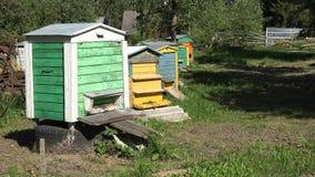 Die Bienen, die zu den bunten Bienenstockhäusern im Sommer fliegen, arbeiten im Garten 4K stock video