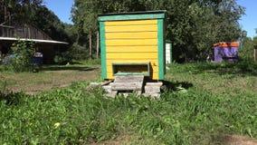 Die Bienen, die zu den bunten Bienenstockhäusern im SommerObstbaum fliegen, arbeiten im Garten 4K stock footage