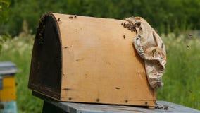 Die Bienenfamilie erfasst in einer Falle für die Bienen Clouse oben stock footage