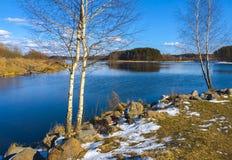 Die Birke auf dem Ufer des Frühlingsflusses Lizenzfreies Stockbild