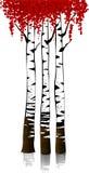 Die Birkenwaldung Lizenzfreies Stockfoto