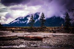Die Bittersüße der Natur und der Abholzung lizenzfreie stockfotografie